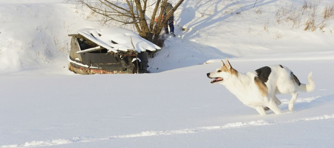 dog winter5