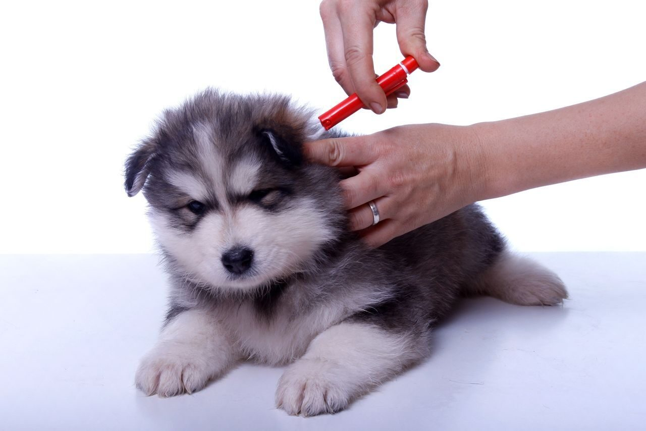 vaccinated dog