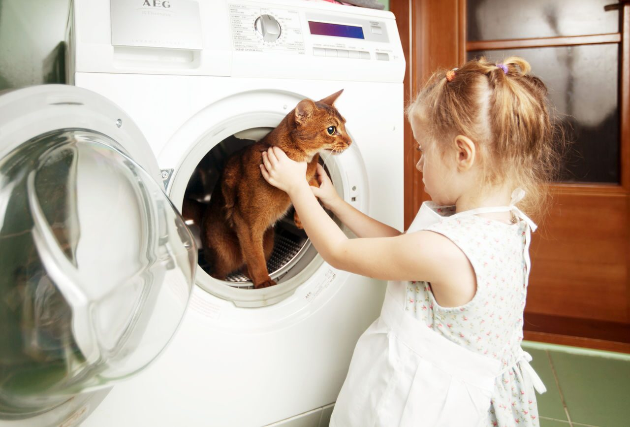 cat washing machine